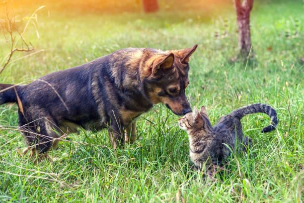 Dog and cat best friends walk in the grass in the garden in autumn picture id941719514?b=1&k=6&m=941719514&s=612x612&w=0&h=vuhtdzhl5okw3cjtc39j4bradbiz tb9wpm0la rrgq=