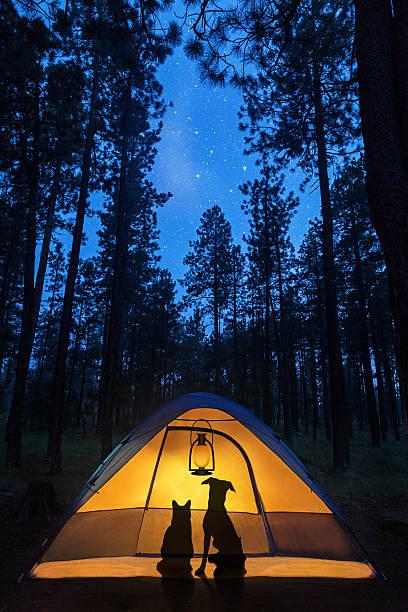 Dog and cat camping under stars picture id592685740?b=1&k=6&m=592685740&s=612x612&w=0&h=ynt4ha72fzkhbbfsoo4fh7uekzzbqsv1ihx8yaokffo=