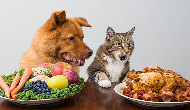 Dog and cat choosing between veggies and meat picture id522424593?b=1&k=6&m=522424593&s=612x612&w=0&h=lml8m1giwpnutcfvinmofxrn3ne jguviw3yzjz9b9m=