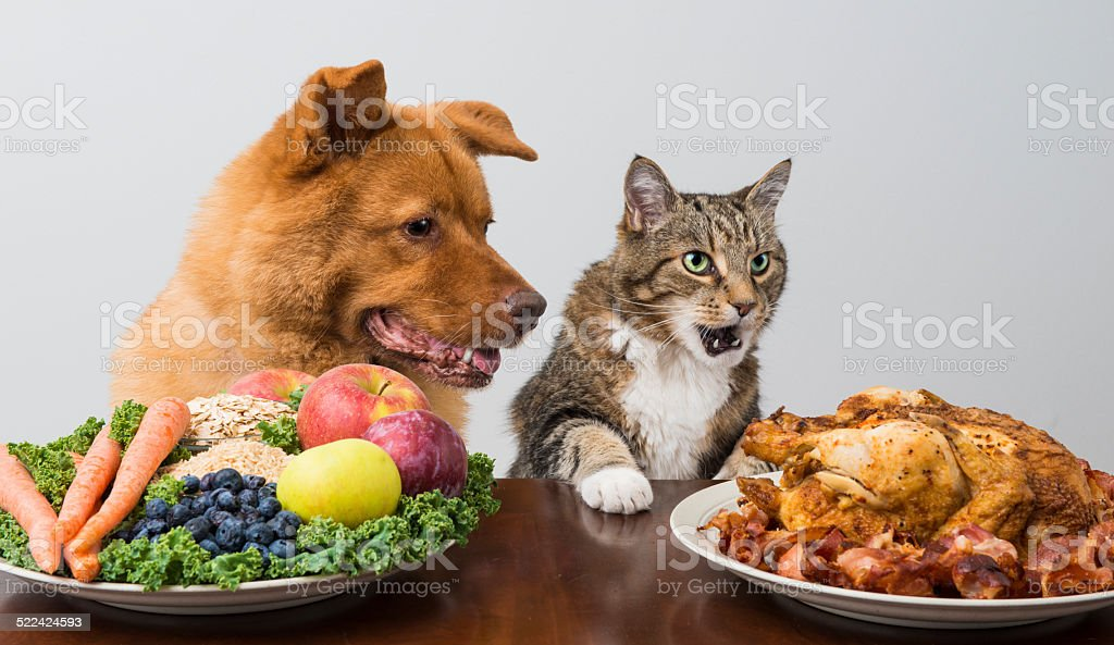 Dog and cat choosing between veggies and meat stock photo