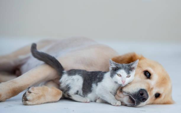 Dog and cat cuddling picture id1068976658?b=1&k=6&m=1068976658&s=612x612&w=0&h=9p0wl5sdkvf44 l4330nokhwwj7z8 ayxa1rfndsdoy=