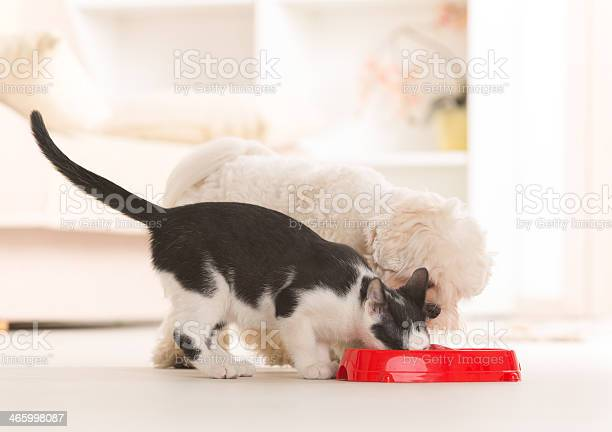 Dog and cat eating food from a bowl picture id465998087?b=1&k=6&m=465998087&s=612x612&h=lz4dae4il1acnovfor1avuimkqdxcsitcqsfnxarepq=
