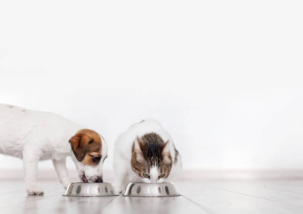 Dog and cat eating food stock photo