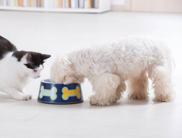 Dog and cat eating from a bowl picture id871648634?b=1&k=6&m=871648634&s=612x612&w=0&h=5mly8npki5uwpyt6rulju9rh3zod4nk265u07wqsdsw=