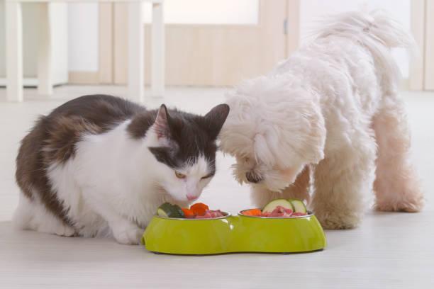 Hund und Katze Naturkost aus einer Schüssel essen – Foto