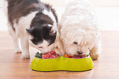 Dog and cat eating natural food from a bowl
