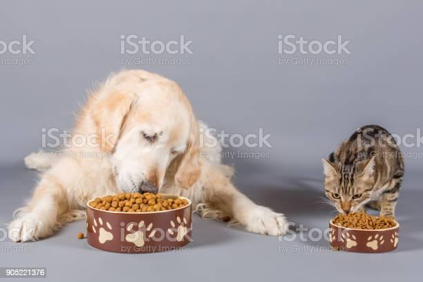 Dog and cat eating picture id905221376?b=1&k=6&m=905221376&s=612x612&h=5xo wwxm3tlhgwrcdc2pjbt9fhhwxcqlisplyof01qe=