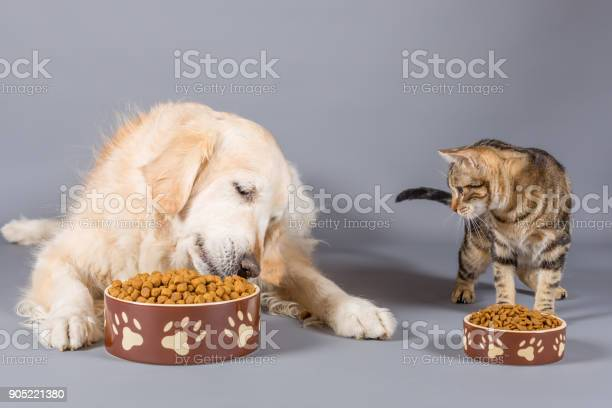 Dog and cat eating picture id905221380?b=1&k=6&m=905221380&s=612x612&h=r6uwn90o18uzxqo4nly8wnn8pxqoninnwduvbgisot4=
