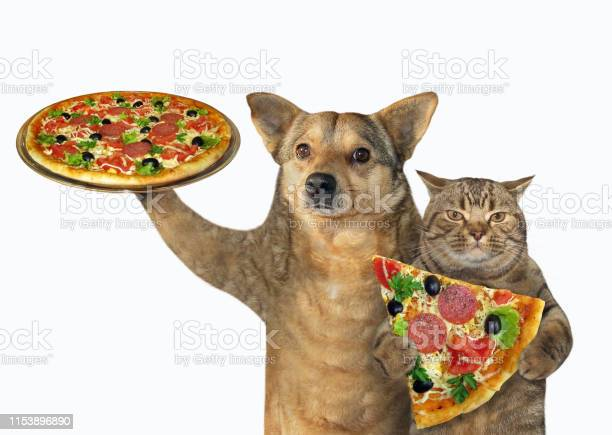 Dog and cat eating pizza picture id1153896890?b=1&k=6&m=1153896890&s=612x612&h=yvh9gdaticqdmlvqb2sm5ov1sqrjcvsozwphibibgsy=