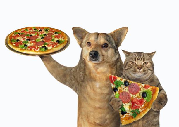 Dog and cat eating pizza picture id1153896890?b=1&k=6&m=1153896890&s=612x612&w=0&h=bfdagbbalx0ey gjfjmzetnigxzj7f0ytwefypbzdti=