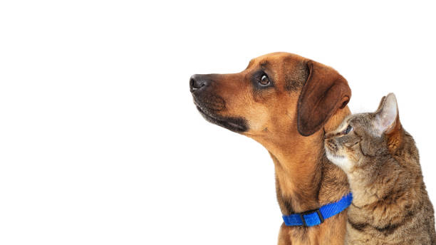 Dog and Cat Facing Side Together on White Closeup stock photo
