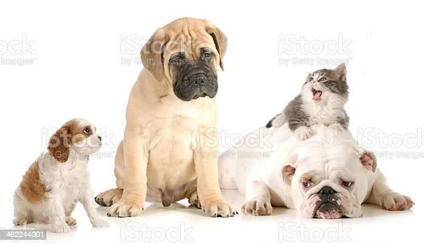 Dog and cat fight picture id462244001?b=1&k=6&m=462244001&s=612x612&h=24nsxnblz5f62oh84szcheem6qohtbti6kaem0bjoeo=