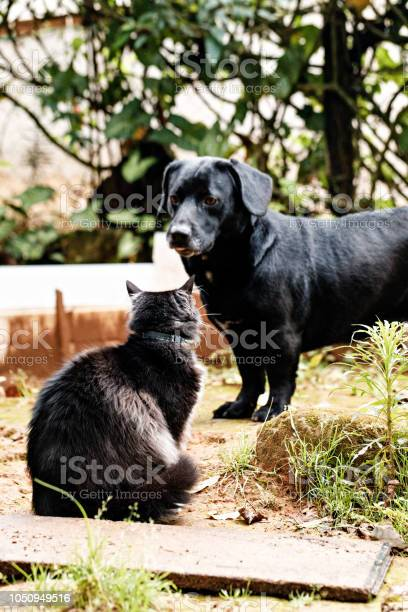 Dog and cat friendship picture id1050949516?b=1&k=6&m=1050949516&s=612x612&h=vbx dwktfgtxxi9i12jzc0jf7qqtr7h kecqdtvyuha=