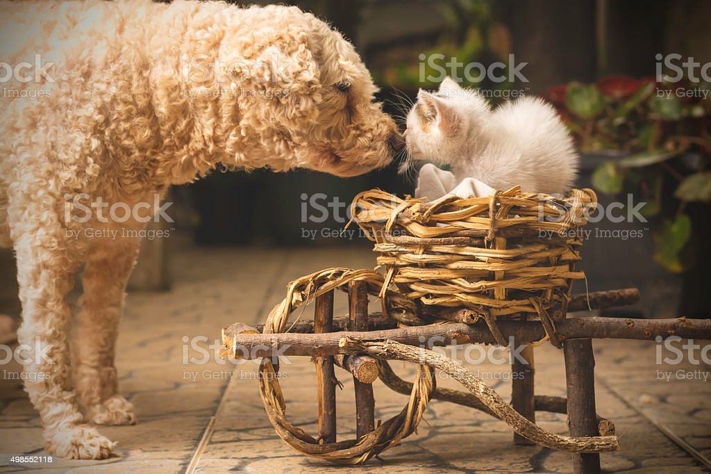 Dog and cat greeting stock photo