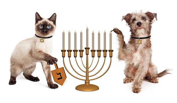 Dog and cat hanukkah celebration picture id500613894?b=1&k=6&m=500613894&s=612x612&w=0&h=wgp5t neldjql5tyvoigiw4n6dxaiohybrgtj nflsk=