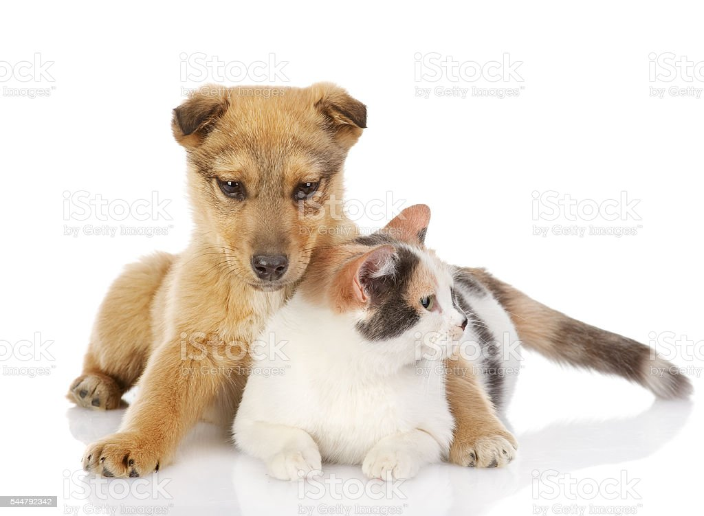 dog and cat have a rest together. stock photo