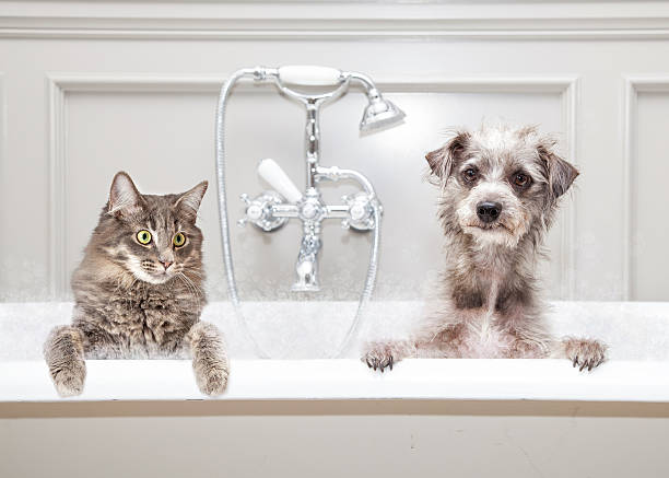 Dog and cat in bathtub together picture id603873904?b=1&k=6&m=603873904&s=612x612&w=0&h=rw4p8ohjytv2oafd4 10rvlfvvrwewr3v2acbsc0w g=