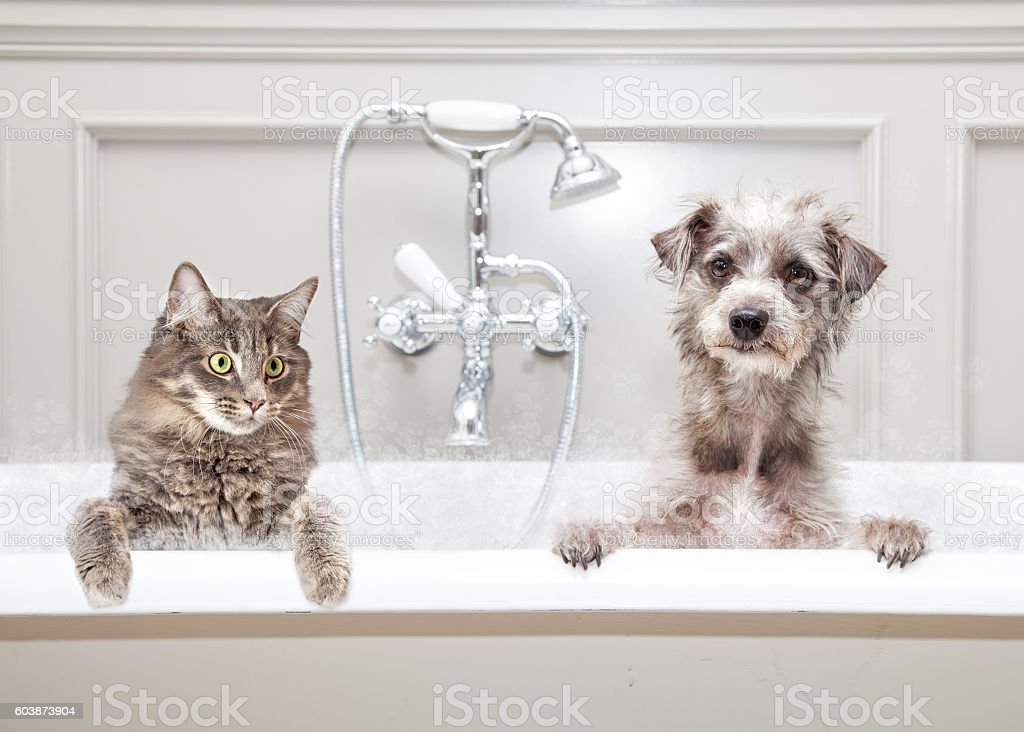 Dog and Cat in Bathtub Together stock photo