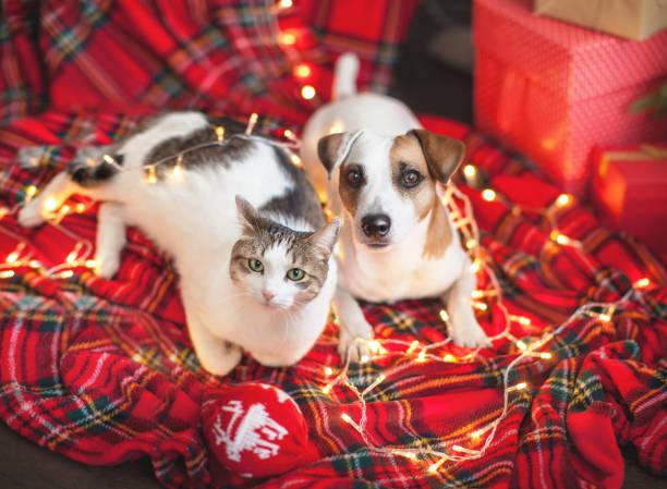 perro y gato en decoración navideña - dog fotografías e imágenes de stock