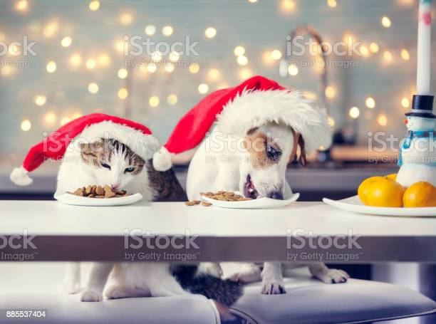 Dog and cat in christmas hat eating food picture id885537404?b=1&k=6&m=885537404&s=612x612&h=vqghlk3ke7uypxsbydfvoemzth xz qauf3n1mudyws=