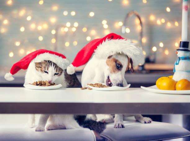 hund und katze in essen weihnachtsmütze - katze weihnachten stock-fotos und bilder