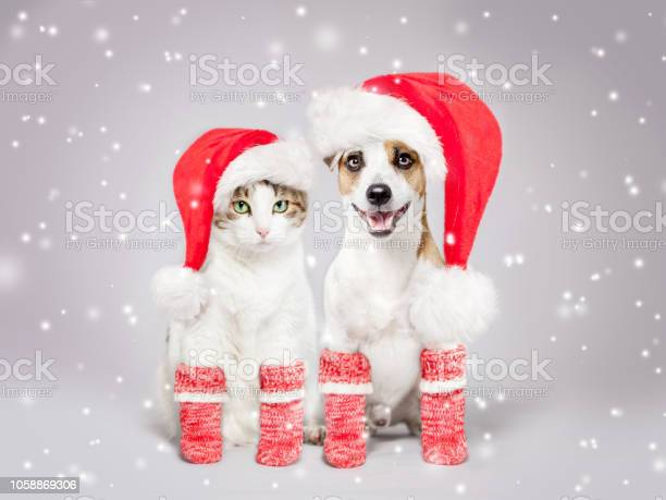 Dog and cat in christmas hat picture id1058869306?b=1&k=6&m=1058869306&s=612x612&h=seoq jhesbwxq35prrehp2hckv6st8c6qouy5nc xeo=