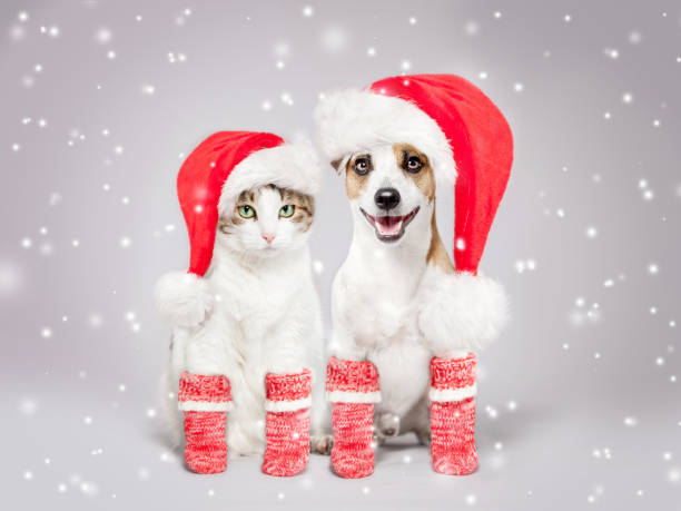 Dog and cat in christmas hat picture id1058869306?b=1&k=6&m=1058869306&s=612x612&w=0&h=wnanppfnbf 7vcbwkcdk  dth0uhbl664atdrl6uats=