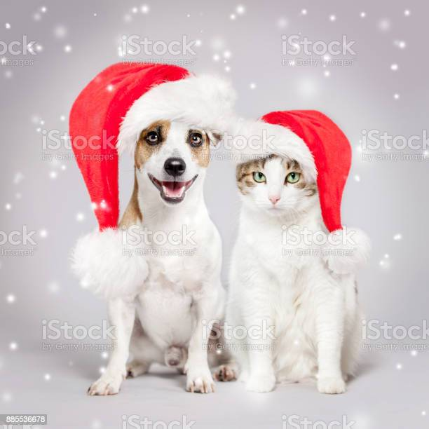 Dog and cat in christmas hat picture id885536678?b=1&k=6&m=885536678&s=612x612&h=z59wzktbpjhgvk7fsposu2k2qrdtq3khxt qhu6ppd0=