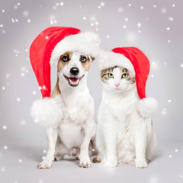 Hund und Katze in Weihnachtsmütze – Foto
