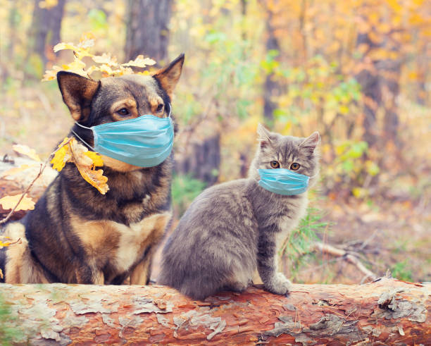 Dog and cat in medical face mask outdoors medical concept picture id1215895201?b=1&k=6&m=1215895201&s=612x612&w=0&h=ujbyoavyyfnutynnenc9lec asvup 6rwtgae6hcllm=