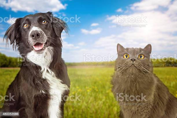 Dog and cat in park closeup picture id480053586?b=1&k=6&m=480053586&s=612x612&h=v 92lkd m5fs7zb 1gbll iqqiifv9bjph6mc53eiyc=