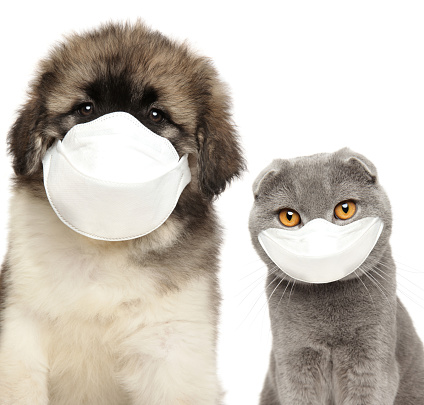 Dog and cat in protective masks on a white background. Baby animal theme