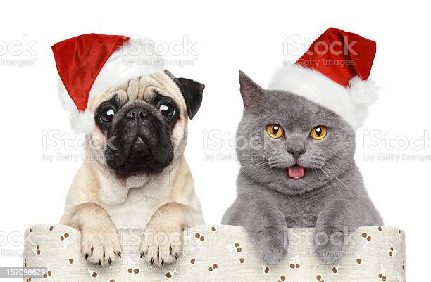 Dog and cat in red christmas hat picture id157096629?b=1&k=6&m=157096629&s=612x612&h=e8wxszk qvotidvsikrsonkbptndd5k0ab vham6vss=