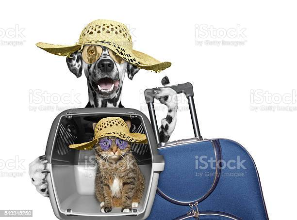 Dog and cat in transportation box are going to travel picture id543345250?b=1&k=6&m=543345250&s=612x612&h=5wmuujdi5tj9gxjzgb3vb zs zjfwmybui8lgvts4sw=