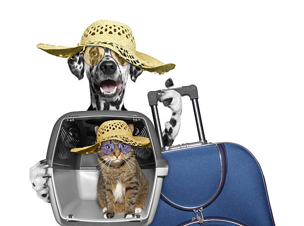 dog and cat in transportation box are going to travel - valise humour photos et images de collection