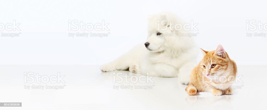 Dog and Cat isolated on white blank background stock photo