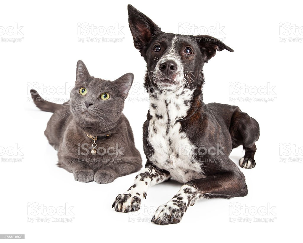 Dog and Cat Laying Looking Up stock photo