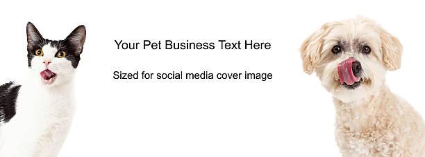 hund und katze lippen lecken titelfoto - katze zeichnen stock-fotos und bilder