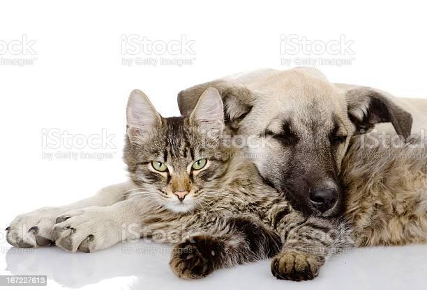 Dog and cat lie together picture id167227613?b=1&k=6&m=167227613&s=612x612&h=rjjepkqgg4nf9262uj9yoxdq8te6qi3u1qbbnbe2jvo=
