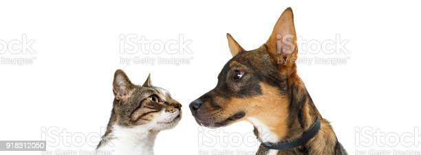 Dog and cat looking at each other banner picture id918312050?b=1&k=6&m=918312050&s=612x612&h=bvxb5fe58vdv9rivz5mxm2l0mldypesgpta5hh14hce=