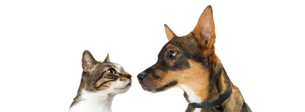 Dog and cat looking at each other banner picture id918312050?b=1&k=6&m=918312050&s=612x612&w=0&h=tltnxvid8efpkxyf19oxgtwxpk343kxdy2wg z ynba=