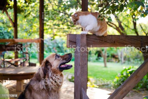 Dog and cat looking at each other picture id1177710919?b=1&k=6&m=1177710919&s=612x612&h=smolsfgypnv lev1xsetpuwgccir9eqtcjgyl kvkkw=