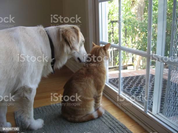 Dog and cat looking at view picture id905397190?b=1&k=6&m=905397190&s=612x612&h=ayfkkrpostf2olyyjvjtpq8ye48gmx7qe6rnxghndnq=
