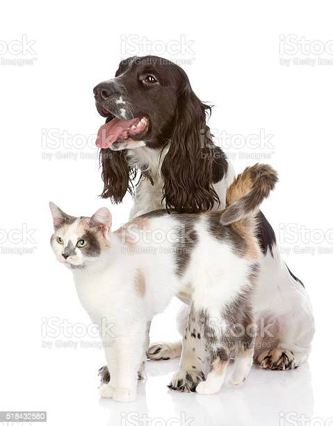 Dog and cat looking away isolated on white background picture id518432580?b=1&k=6&m=518432580&s=612x612&h=jopd7f3m dofedi aiso0xktemzwzmlliwmrvhgrhwa=