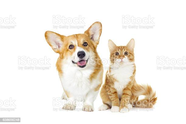 Dog and cat looking picture id638656248?b=1&k=6&m=638656248&s=612x612&h=nepaefrbetw0dvqk66mb8ikuxvwfcubw5jt6atvtr5g=
