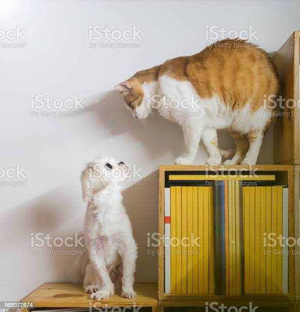 Dog and cat looking sideway on each other above the bookshelf picture id868372674?b=1&k=6&m=868372674&s=612x612&h=wt4yibusyjr6xjle9pfoqq2 k4dnxqxarw8q5kgqz8a=
