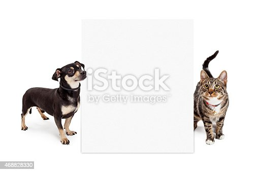 istock Dog and Cat Looking Up at Tall Blank Sign 468828330