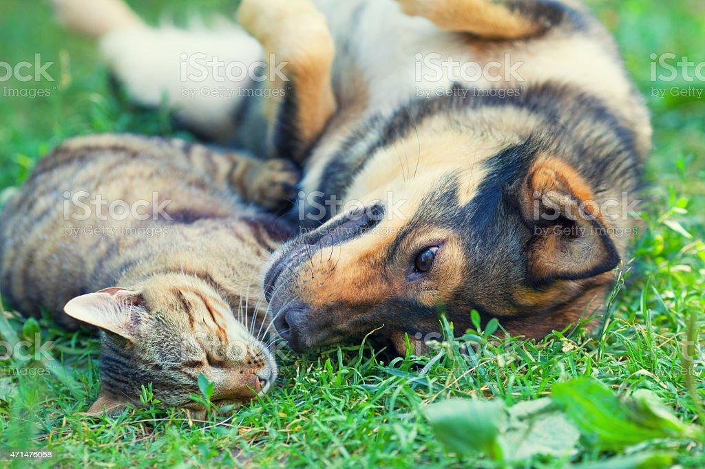 Perro y gato yacer juntos en el césped - foto de stock