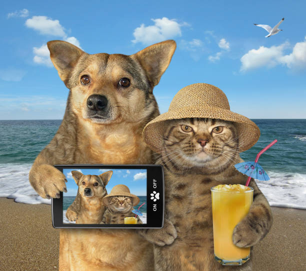 Dog and cat made selfie on the beach 2 stock photo