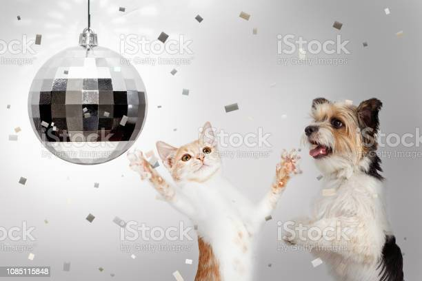 Dog and cat new years celebration party picture id1085115848?b=1&k=6&m=1085115848&s=612x612&h=ok1 xj4ct vpjl1o7gowusbzui4hpisi2wezjxj9amy=